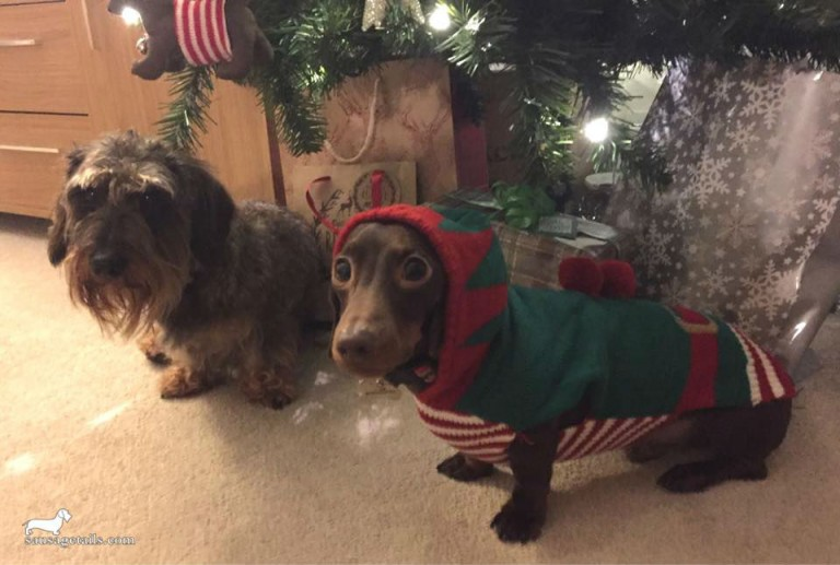 Dachshund Elf Jumper