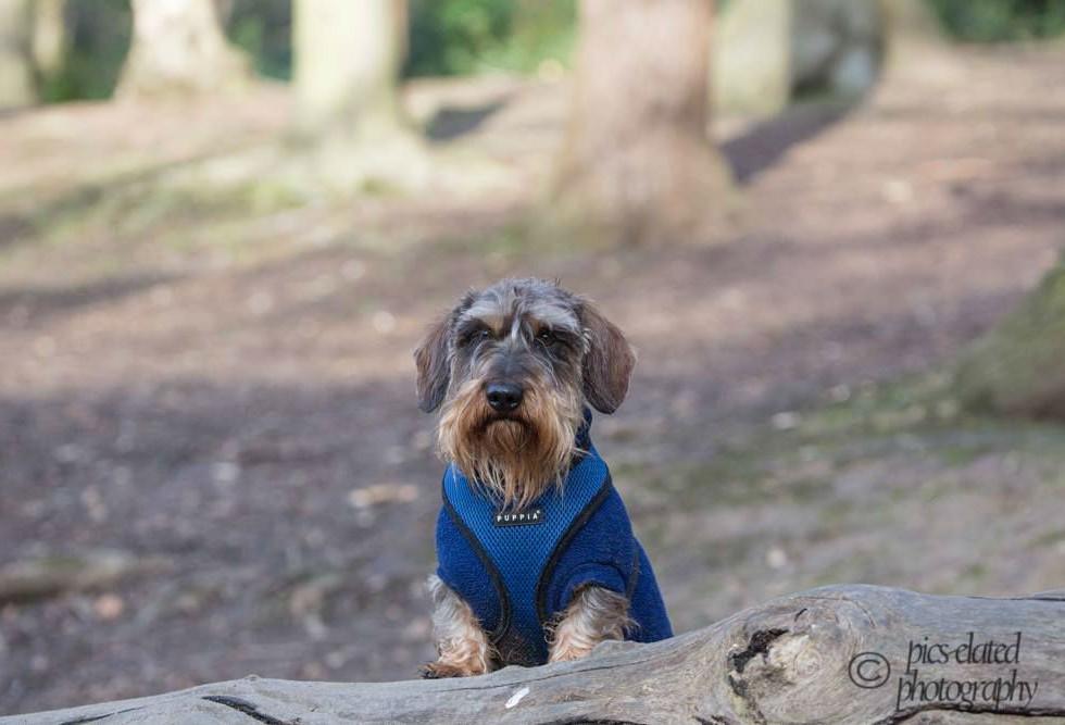 Wimbledon Dog Walks