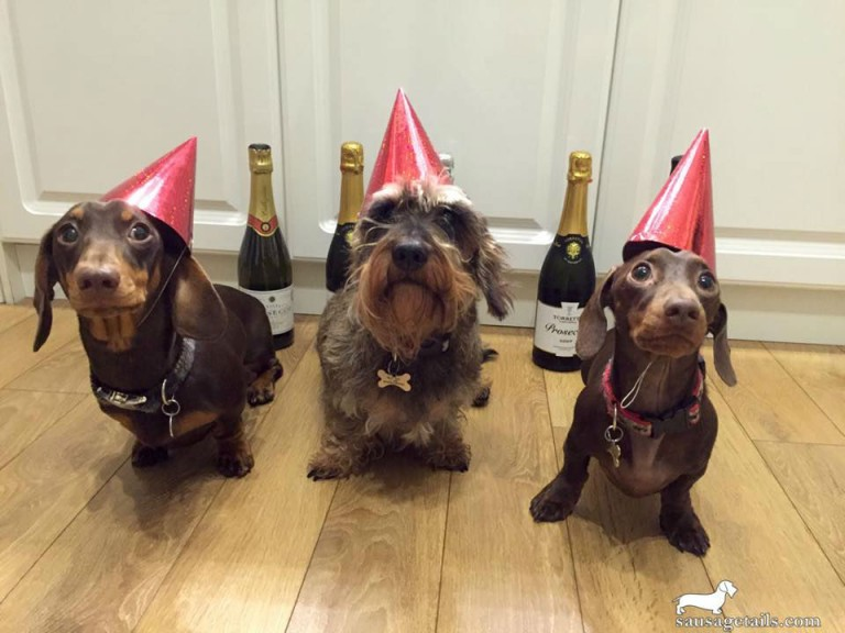 Sausage Dog New Year