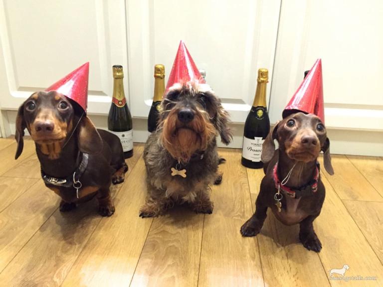 Dachshund New Year