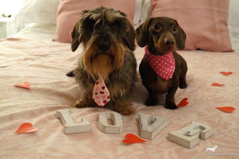 Dachshund Valentines