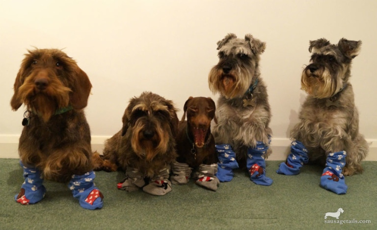 New Looks Sausage Dog Socks