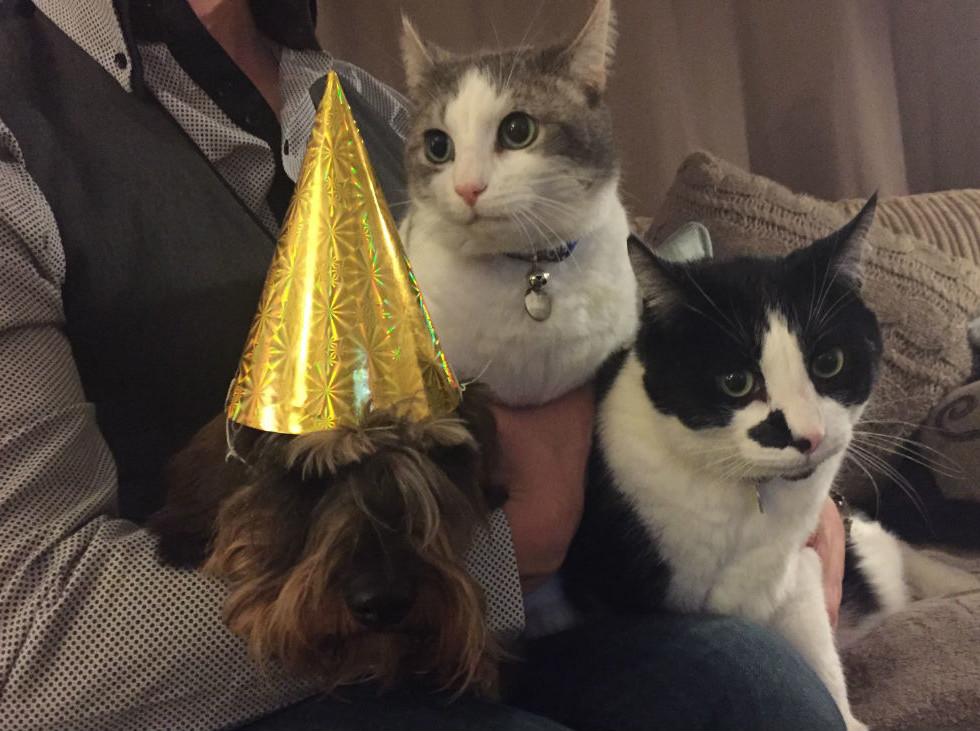 Dachshund Cat