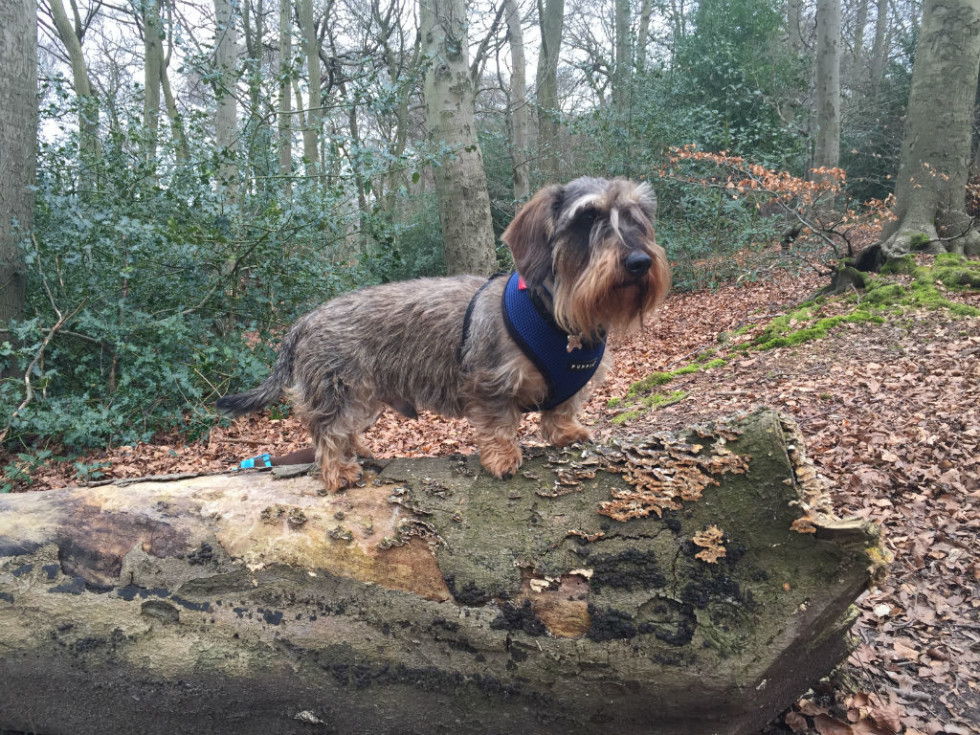 Dog on a Log