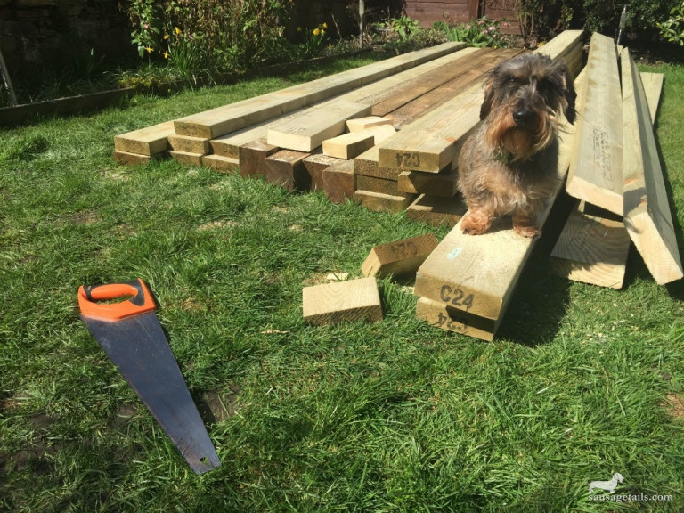 Sausage Dog Garden