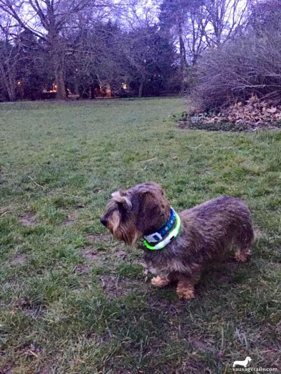 Dog Glow Collar