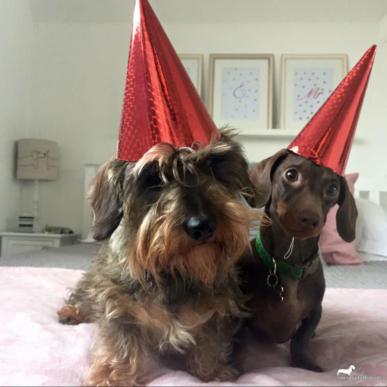 Dachshund Party Hat