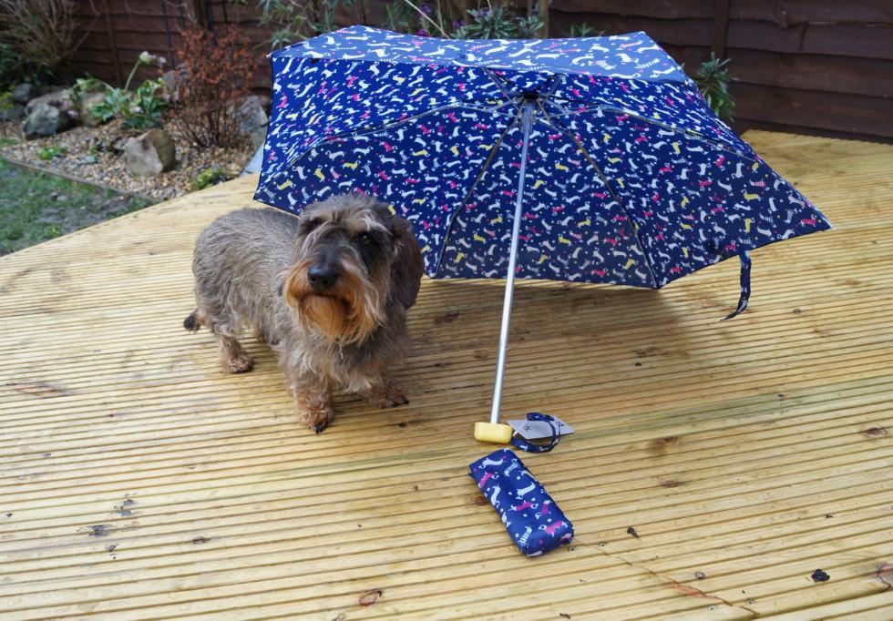Dachshund Umbrella