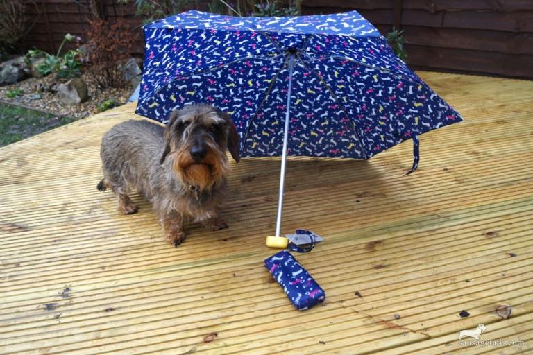 Sausage Dog Umbrella