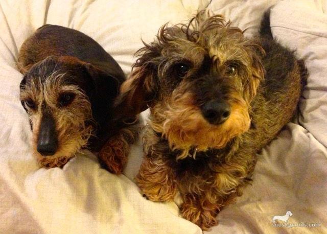 Ginny & Ruby