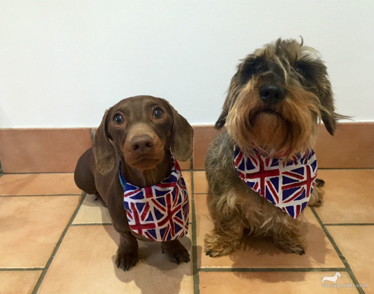 Dog Union Jack Bandana