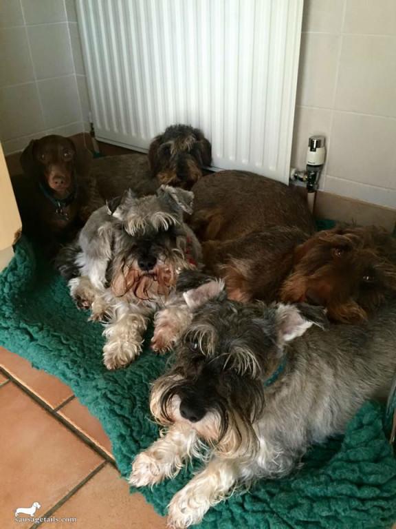 Sausage Dog Bed