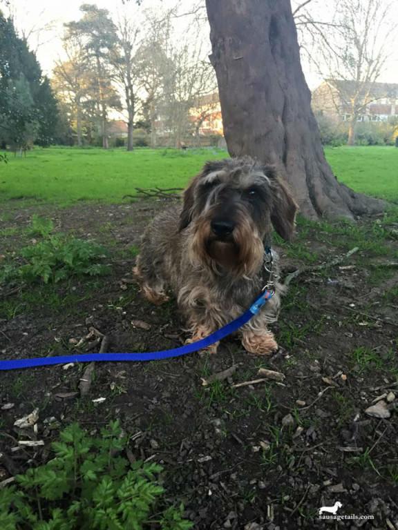 Sausage Dog Collar & Lead