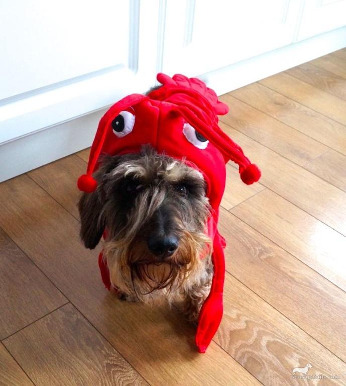 Dog Lobster