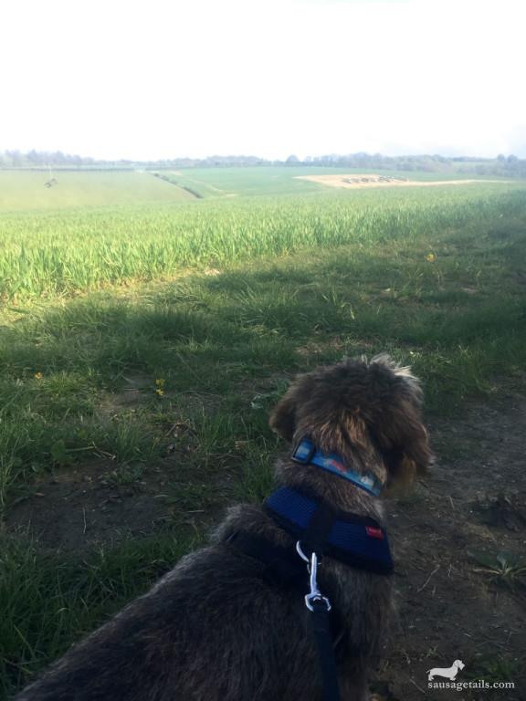 Chiltern Hills Dog Walks