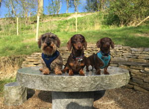 Stokenchurch Dog Walks