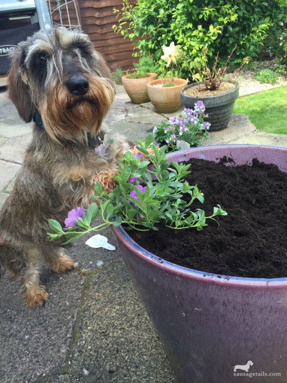 Sausage Dog Plant Pot