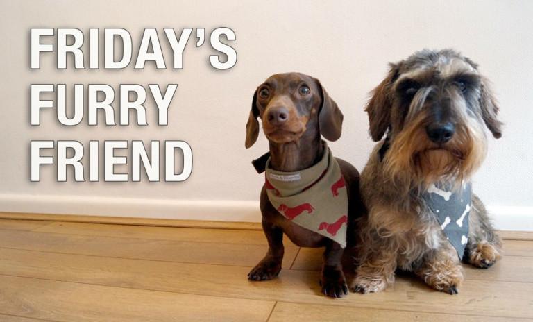 Fridays Furry Friend