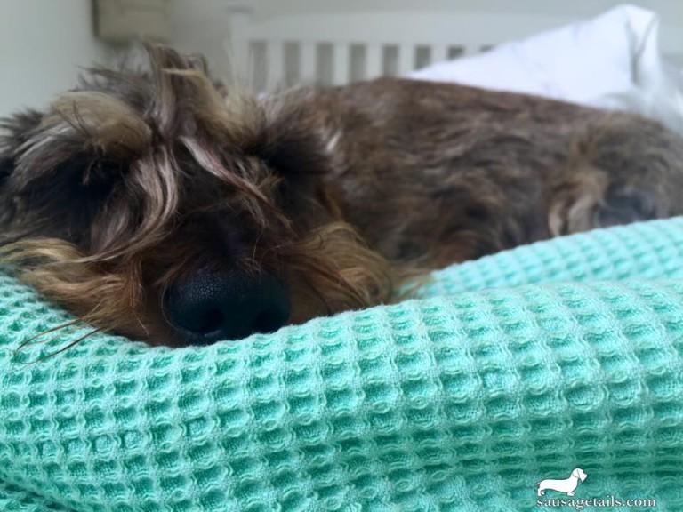 Sausage Dog Blanket