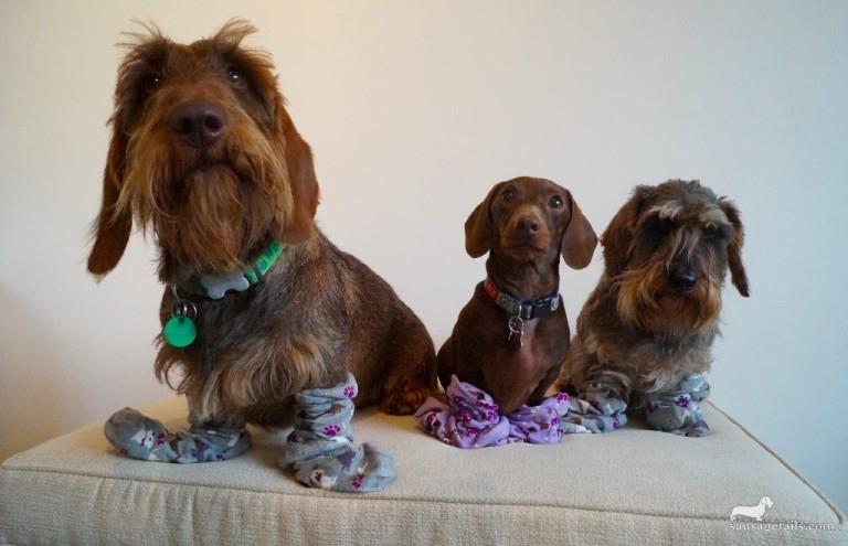 Sausage Dog Socks