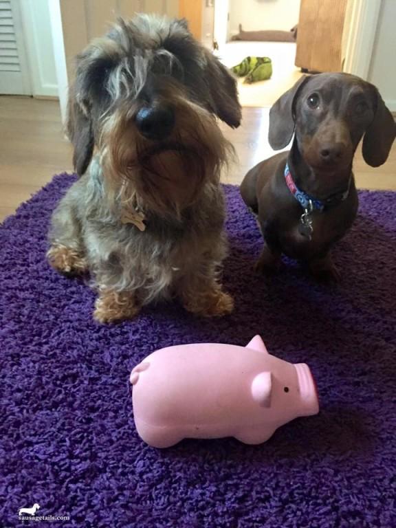 Dog Pig Toy