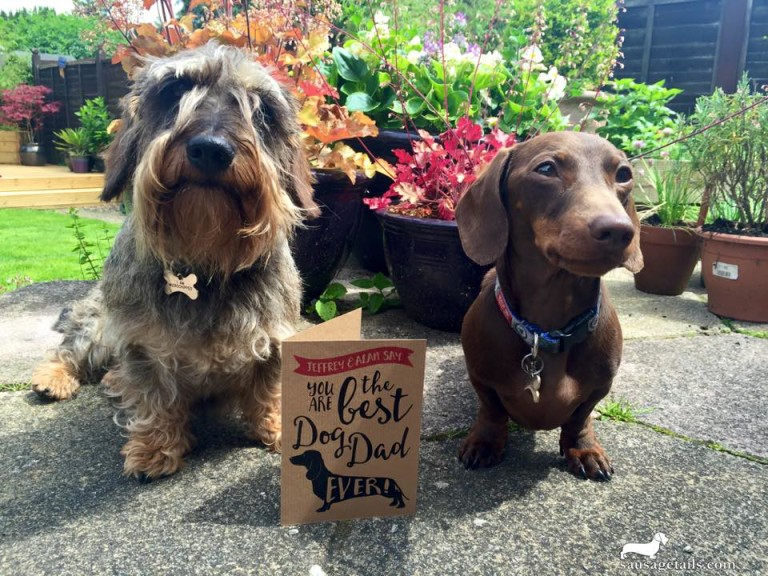 Dachshund Fathers Day