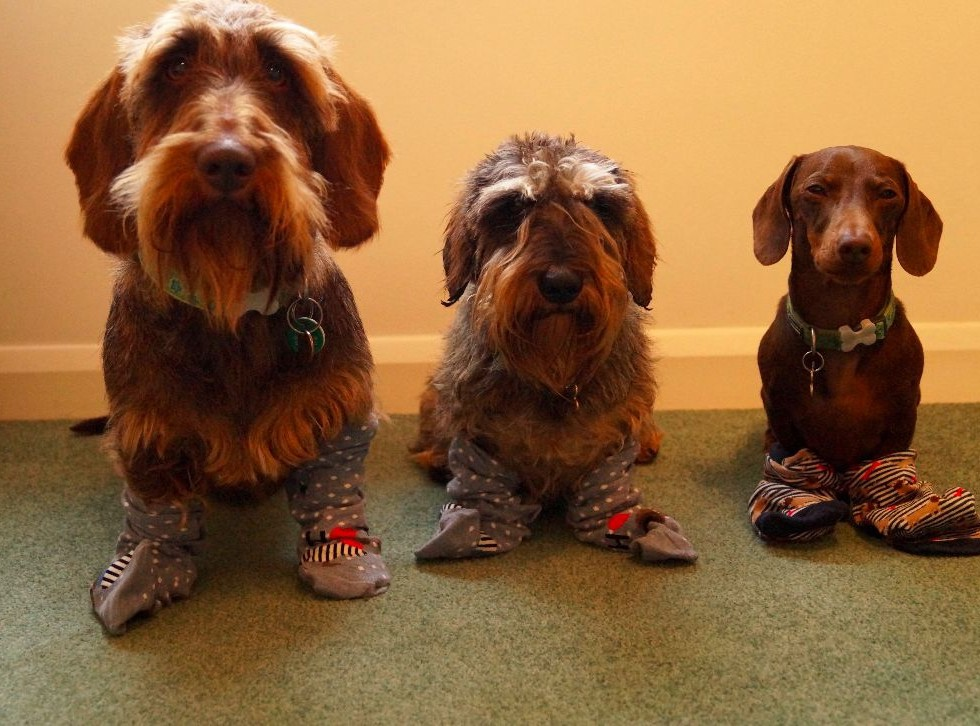 Accessorize Sausage Dog Socks
