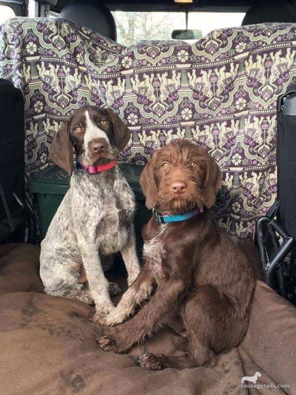 Alfie & Dottie