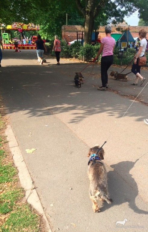 Sausage Dog Walks