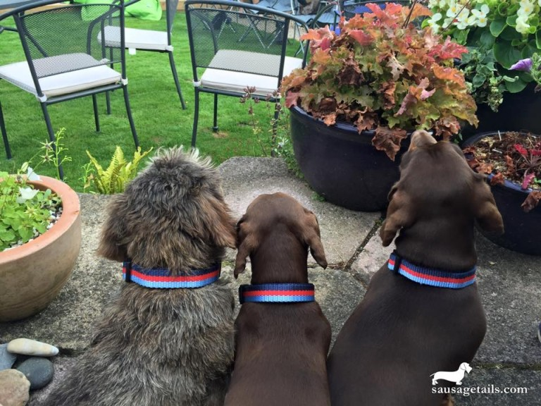 Help for Heroes Dog Collar