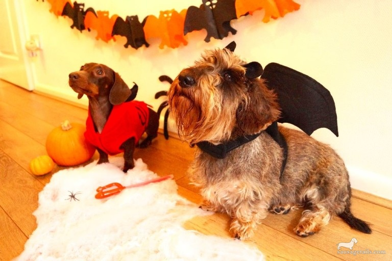 Sausage Dog Halloween