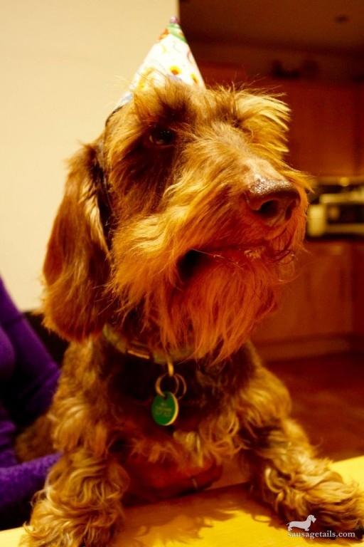 Rodney Sausage Dog