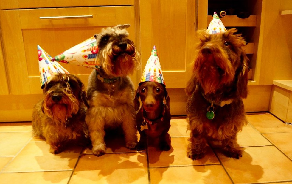 Dachshund Birthday
