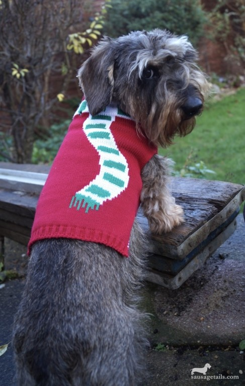 Boohoo Christmas Dog Jumpers