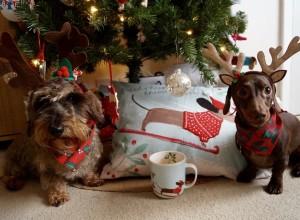 Sausage Dog Christmas Cushion