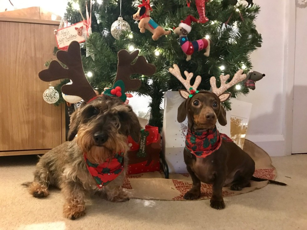 Sausage Dog Christmas