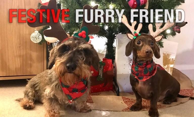 festive-furry-friend-2016