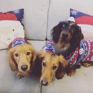 Woody, Cinnamon & Charlie