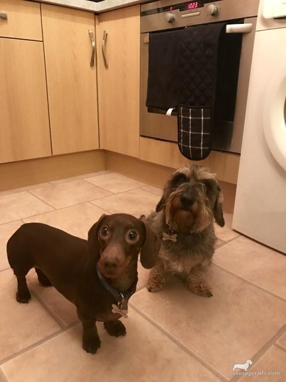 Alan & Jeffrey Dog