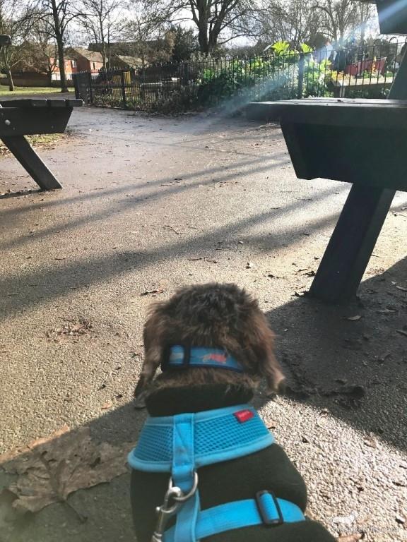 Sausage Dog Harness