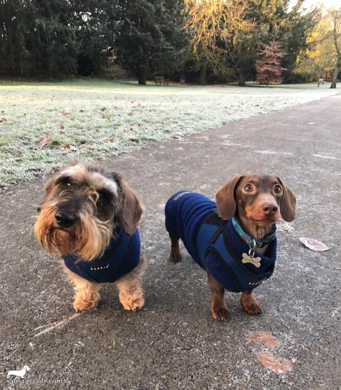 Frosty Dogs