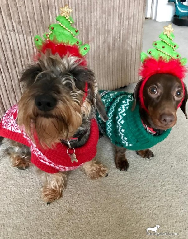 Christmas Dog Headband