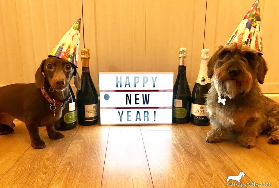 Dachshund New Year