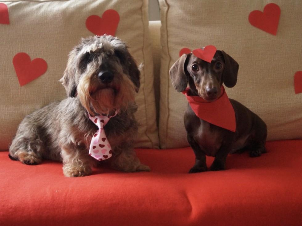 Sausage Dog Valentines