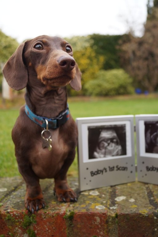 Dog Baby Announcement