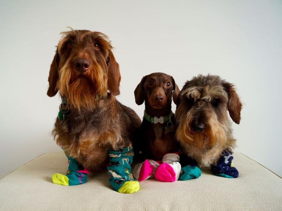 Joules Dog Socks