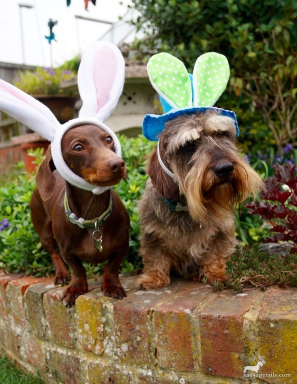 Sausage Dog Easter