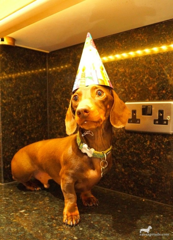 Sausage Dog Party Hat
