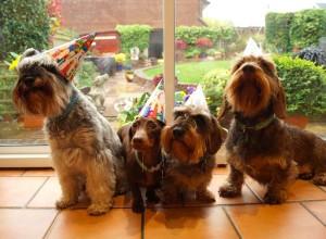 Sausage Dog Party