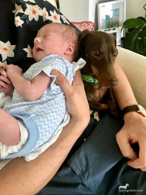 Sausage Dog and Baby